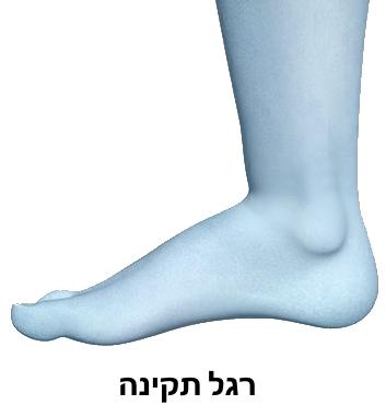 רגל בעלת קשת תקינה