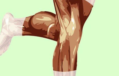 אנטומיה של הברך